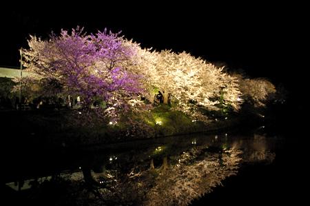福岡城さくら祭り