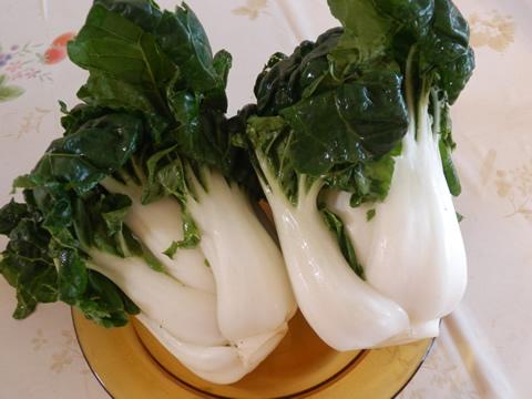 白い青梗菜